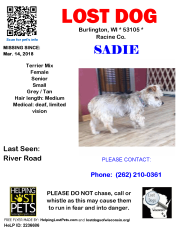 031418 Sadie Terrier Mix Senior deaf and limited vision