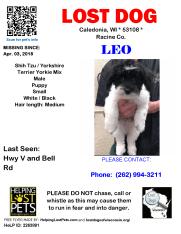 040318 Leo Shih Tzu Puppy