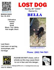 110518 Bella Chihuahua Adult