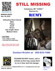 110518 Remy Chihuahua Puppy - BillyPosseUpdate112618
