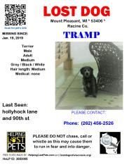 0119 Tramp Terrier Adult
