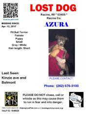 041217 Azura Pit Puppy