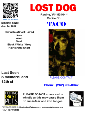 061417 Taco Chihuahua Adult