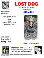 062715 Josie Jack Russel Adult