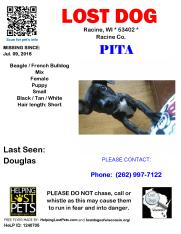 070916 Pita Beagle Bulldog Puppy