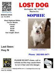 071015 Sophie West Highland Terrier Adult