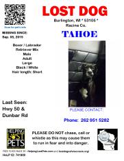 090515 Tahoe Boxer Lab Adult