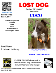 092615 Coco It Greyhound Adult