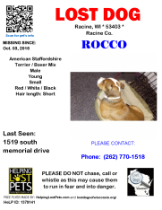 100316 Rocco Boxer Mix Young