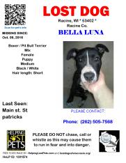 100916 Bella Luna Pit Puppy