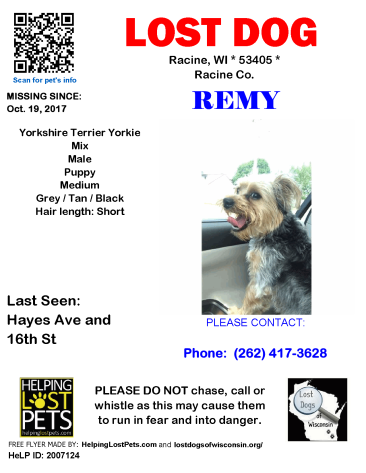 101917 Remy Yorkshire Puppy