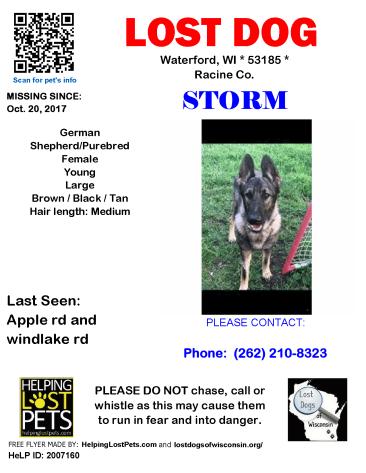 102017 Storm Germ Shepherd Young