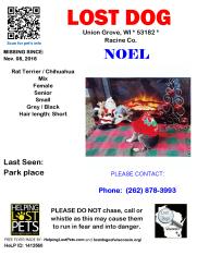 110816 Noel Rat Ter Chihuahua Senior