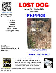 112415 Pepper Pit Puppy