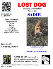 0629 Sadie Boxer Rhodesian Senior