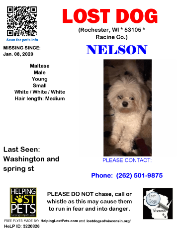 0108 Nelson Maltese Young