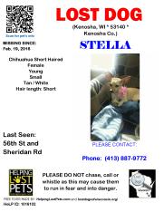 0219 Stella Chihuahua Young