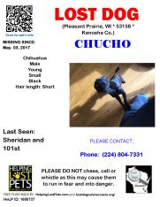0508 Chucho Chihuahua Young