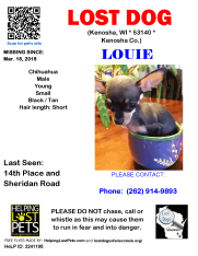 0518 Louie Chihuahua Young
