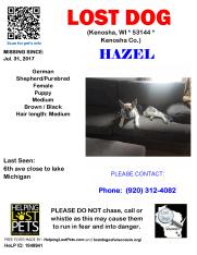 0731 Hazel GSD Puppy
