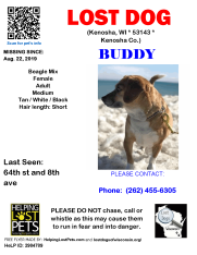 0822 Buddy Beagle Mix Adult