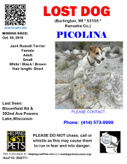 1003 Picolina Jack Russell Adult