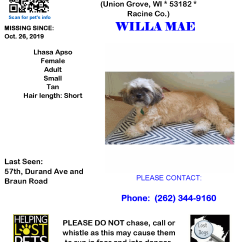 1026 Willa Lhaso Apso Adult