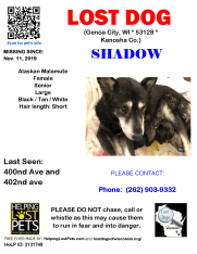 1111 Shadow Alaskan Mal Senior - Kenosha