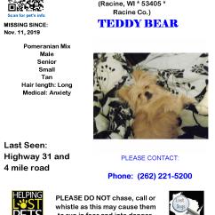1111 Teddy Bear Pomeranian Senior