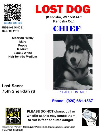 1912 Chief Sib Husky Puppy